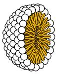 MicelleColor