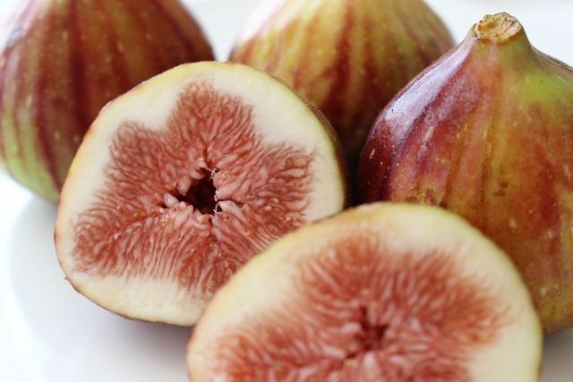 [イチジク果実エキス]イチジク果実から抽出したエモリエント成分
