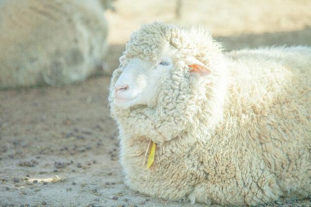 [加水分解ケラチン(羊毛)]シスチンを多く含むコンディショニング成分