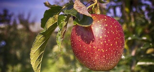 [リンゴ果実培養エキス]奇跡のりんごの力で、肌のアンチエイジング