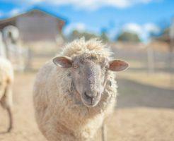 ヒドロキシプロピルトリモニウム加水分解ケラチン(羊毛)