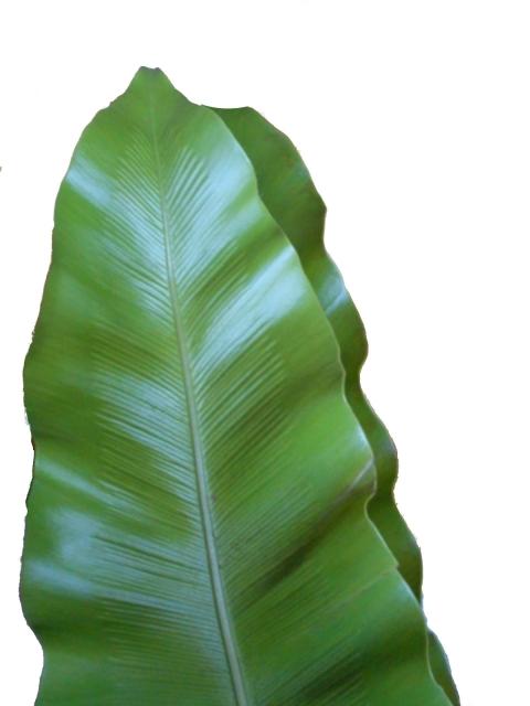 [褐藻 エキス]昆布やわかめなどから取れる肌のハリをよくする保湿成分