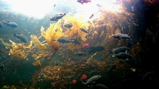 [海藻エキス]海藻由来のフコイダインの保湿効果が得られる成分