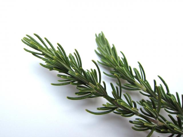 [ローズマリー油]肉の消臭だけじゃ無く頭皮脱毛にも効果のある抗酸化成分