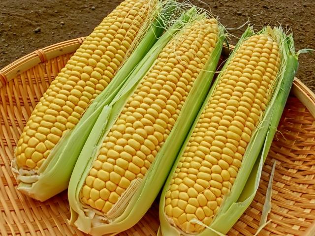 [プロパンジオール]植物由来の糖を発酵して得られる保湿性のあるグリコール成分