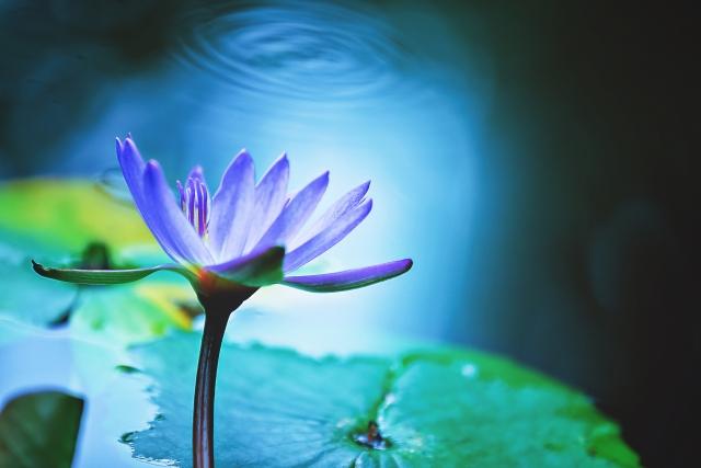 [紫401]アリズロールパープルと呼ばれる水溶性色素は着色剤です。