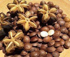 プルケネチアボルビリス種子油