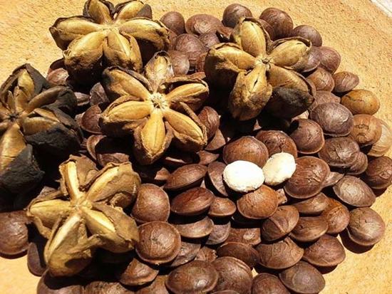 [プルケネチアボルビリス種子油]南米で健康野菜はオメガ3が豊富なエモリエント成分