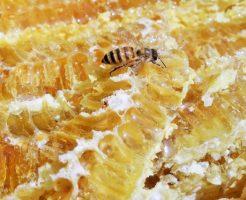 加水分解ハチミツタンパク
